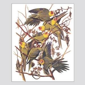 Carolina Parakeets Vintage Reproduction Audubon Bi