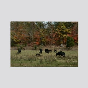 Fall Angus Rectangle Magnet
