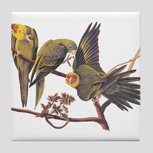 Three Parakeets from Audubon's Birds of America Ti