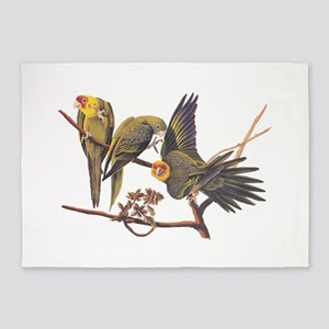 Three Parakeets from Audubon's Birds of America 5'