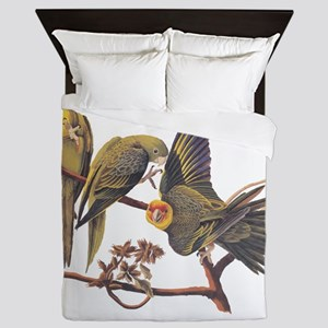 Three Parakeets from Audubon's Birds of America Qu