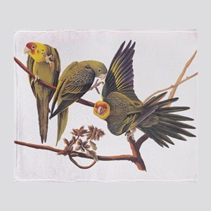 Three Parakeets from Audubon's Birds of America Th