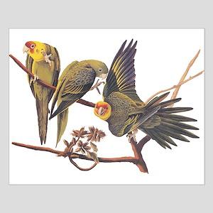 Three Parakeets from Audubon's Birds of America Po