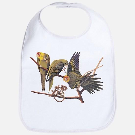 Three Parakeets From Audubon's Birds Of Bib