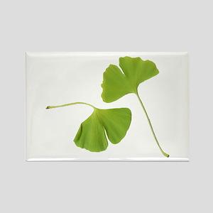 Ginkgo Biloba Leaves Rectangle Magnet
