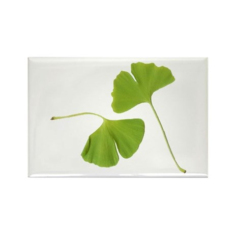 Ginkgo Biloba Leaves Rectangle Magnet