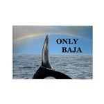 ONLY BAJA RAINBOW WHALE Rectangle Magnet (100 pack