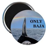 ONLY BAJA RAINBOW WHALE Magnet