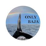 ONLY BAJA RAINBOW WHALE 3.5