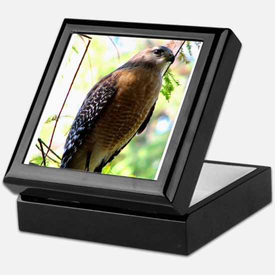Cute Bird of prey Keepsake Box