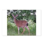 Doe in the Shade Postcards (Package of 8)