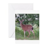 Doe in the Shade Greeting Cards (Pk of 10)