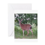 Doe in the Shade Greeting Card