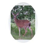Doe in the Shade Oval Ornament