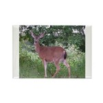 Doe in the Shade Rectangle Magnet