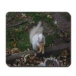 Rare White Squirrel Mousepad