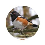 Spotted Towhee 3.5