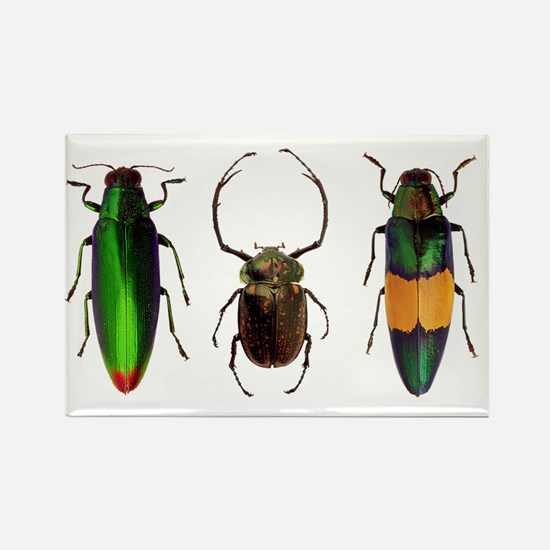 Unique Insects Rectangle Magnet