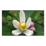 Lemon Blossom Rectangle Sticker