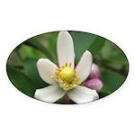Lemon Blossom Oval Sticker