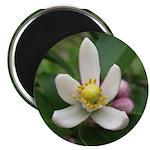 Lemon Blossom Magnet