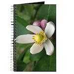 Lemon Blossom Journal