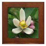 Lemon Blossom Framed Tile