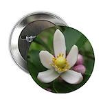 """Lemon Blossom 2.25"""" Button"""