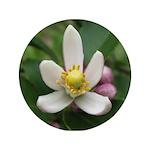 """Lemon Blossom 3.5"""" Button"""