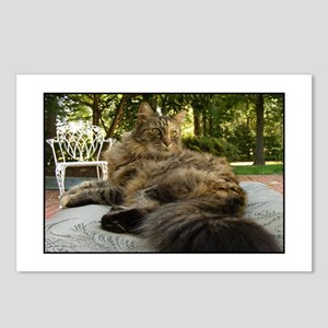 Maine Coon cat bushy tail Postcards (Package of 8)