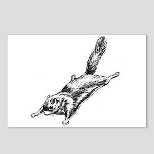 Flying Squirrel Illustration  Postcards (Package o