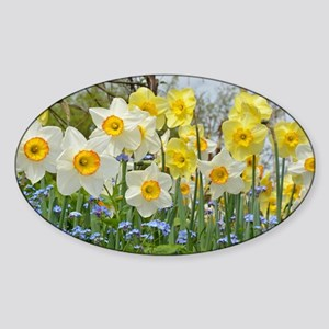 White and yellow daffodils Sticker
