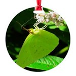 Cloudless Sulfur Butterfly Ornament