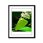 Cloudless Sulfur Butterfly Framed Panel Print