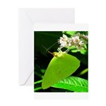 Cloudless Sulfur Butterfly Greeting Cards