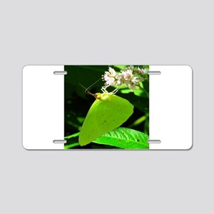 Cloudless Sulfur Butterfly Aluminum License Plate