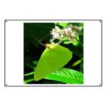 Cloudless Sulfur Butterfly Banner