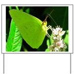 Cloudless Sulfur Butterfly Yard Sign