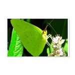 Cloudless Sulfur Butterfly Wall Decal