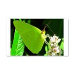 Cloudless Sulfur Butterfly Car Magnet 20 x 12