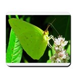Cloudless Sulfur Butterfly Mousepad