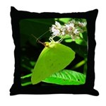 Cloudless Sulfur Butterfly Throw Pillow