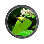 Cloudless Sulfur Butterfly Wall Clock