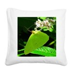 Cloudless Sulfur Butterfly Square Canvas Pillow