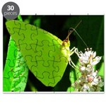 Cloudless Sulfur Butterfly Puzzle
