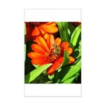 Bee on Orange Daisy Posters