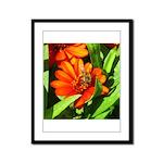 Bee on Orange Daisy Framed Panel Print