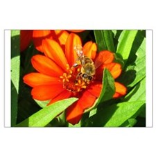 Bee on Orange Daisy Posters