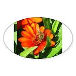 Bee on Orange Daisy Sticker