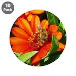 Bee on Orange Daisy 3.5